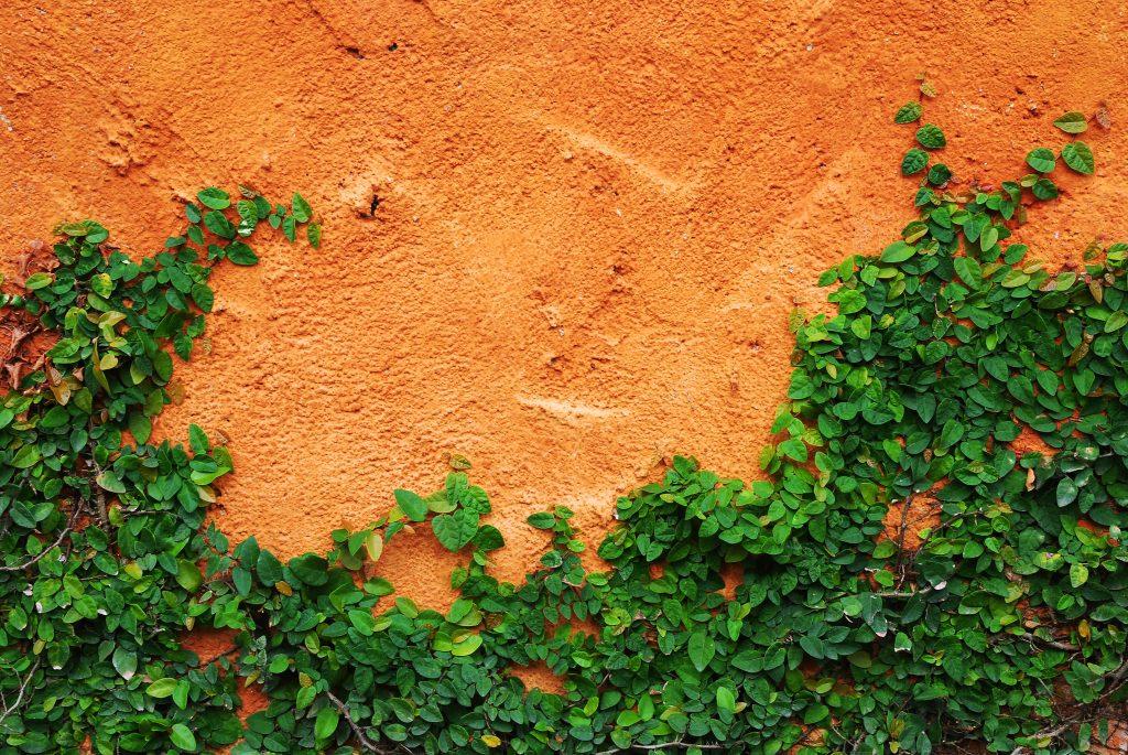 Albuquerque stucco